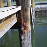 Dock Assessment - Project Gallery