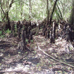 Environmental Property Assessment – Immokalee, FL